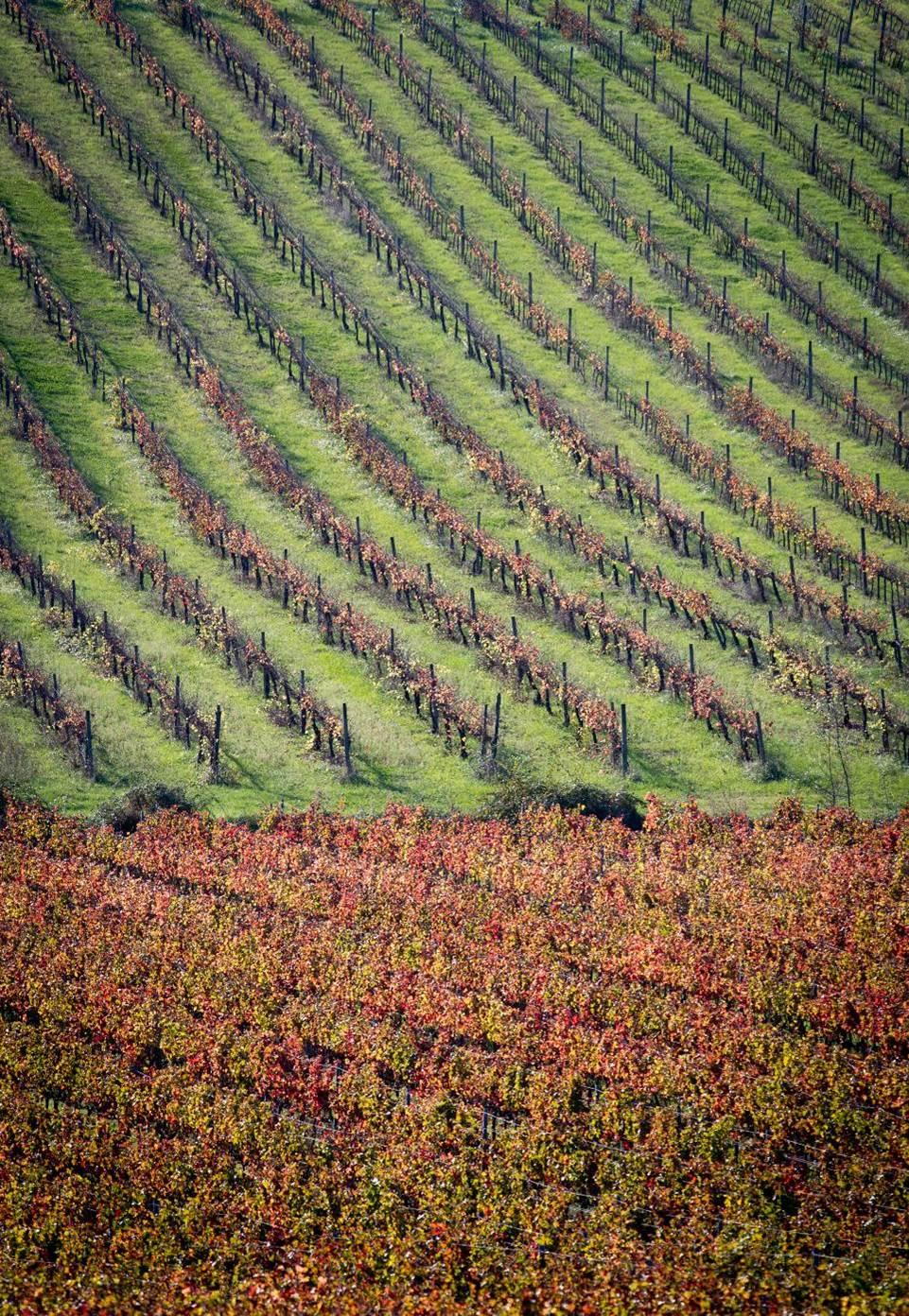 Le vigne del Sagrantino